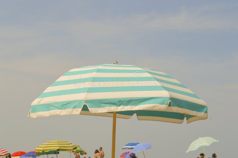 小野鸭和白色沙滩伞和蓝天 库存图片