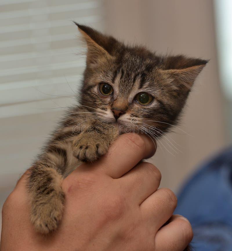 小镶边小猫 免版税库存照片
