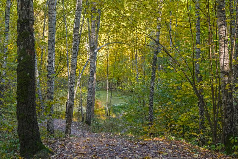 小长得太大的湖在秋天森林里 免版税库存照片