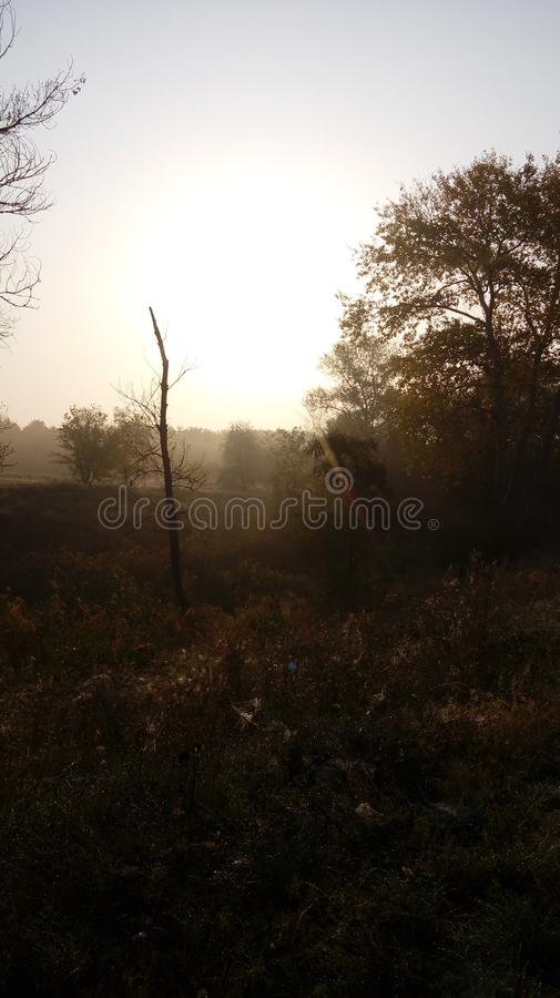 小阳春 早晨在森林里 免版税库存图片