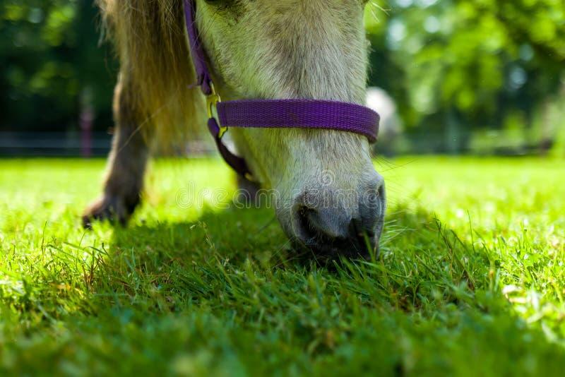 小马特写镜头在绿色草甸的 免版税图库摄影