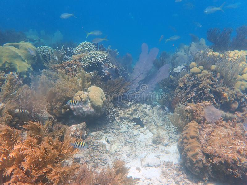 小鱼学校在珊瑚的 库存照片