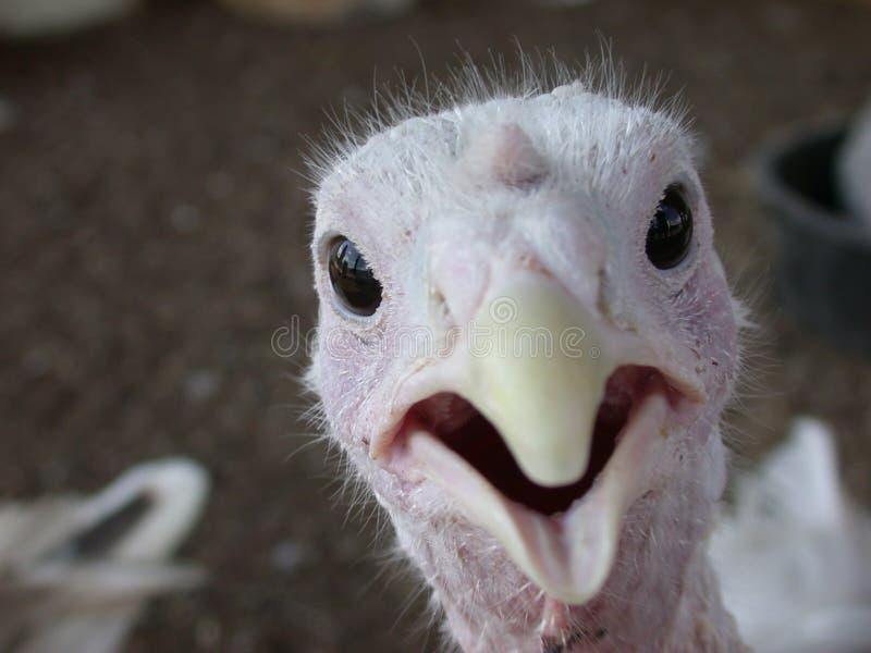小鸟惊奇 免版税图库摄影