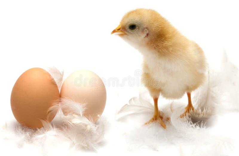 小鸡概念复活节年轻人 库存图片