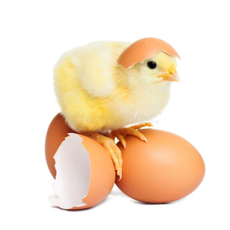 小鸡 免版税库存图片