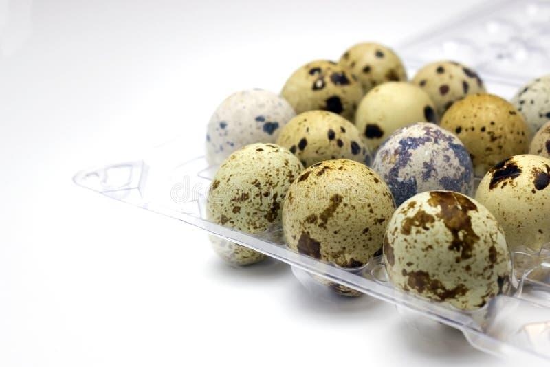 小鹌鹑蛋照片在透明塑胶容器的在白色背景 我喜欢健康生活方式,健康吃 免版税库存图片