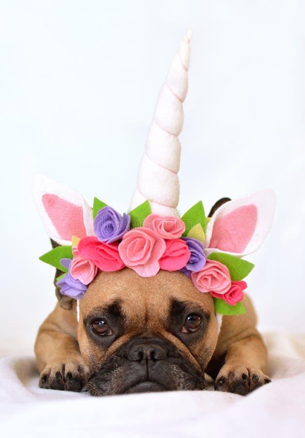 小鹿有黑面具和独角兽头饰带的法国牛头犬女孩有说谎在白色背景的地板上的花的 免版税图库摄影