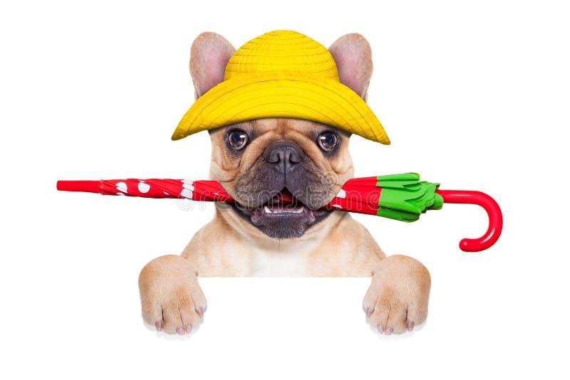 小鹿法国牛头犬准备好步行 免版税库存照片