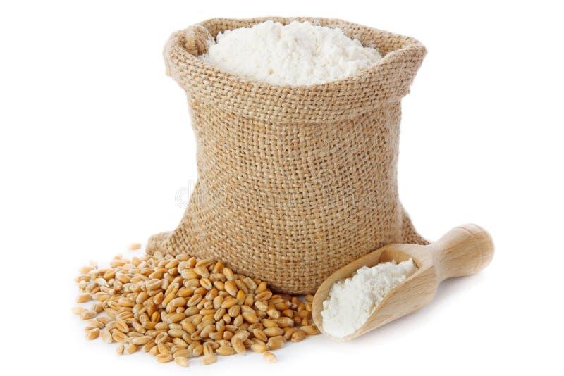 小麦面粉 库存照片