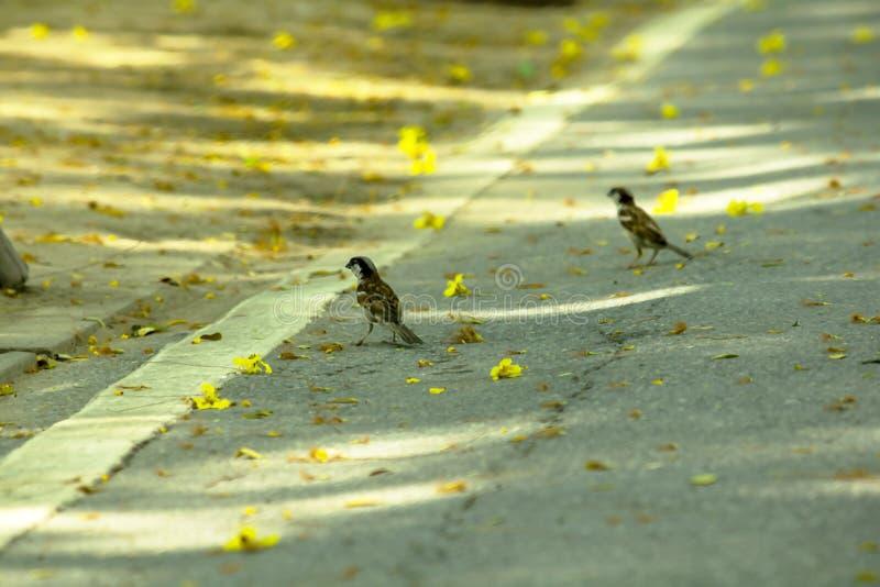 小麻雀在地面上站立在公园 免版税库存图片