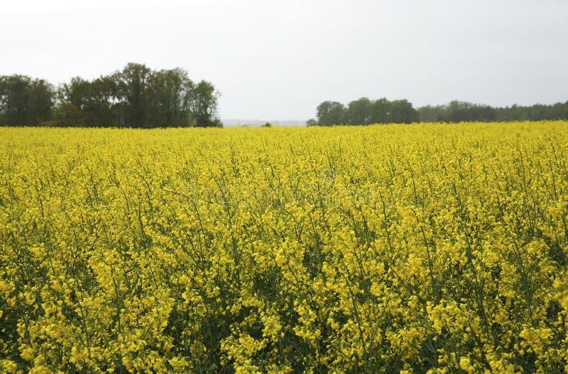 黄色小�{�p_小黄色花卉生长在领域.