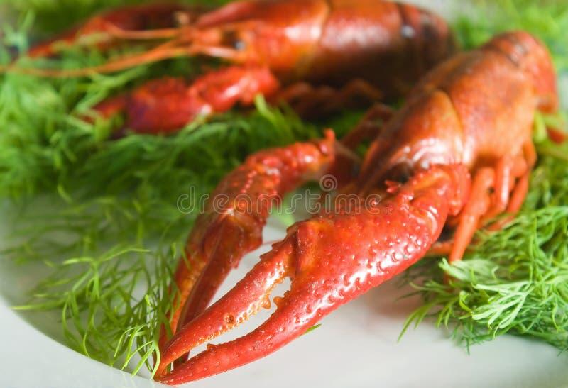 小龙虾,爪 免版税库存图片