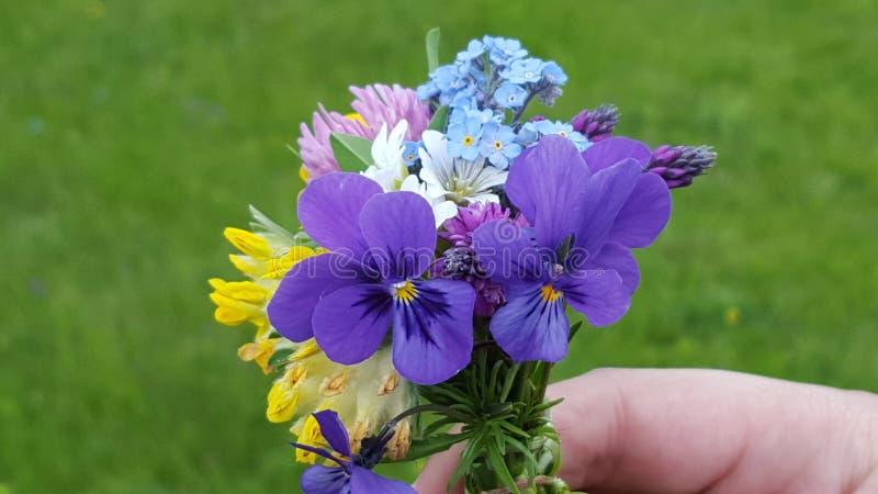 小,但是五颜六色的山美妙的花束开花 图库摄影