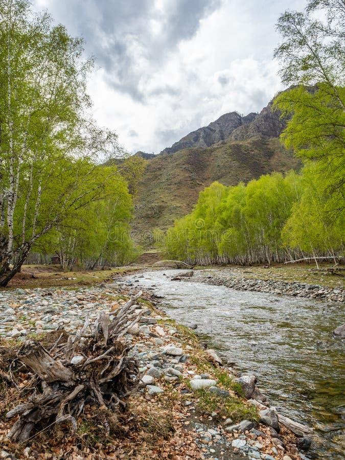 小,但是风雨如磐的山河小Yaloman和森林在阿尔泰,俄罗斯 库存照片