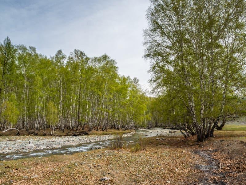 小,但是风雨如磐的山河小Yaloman和森林在阿尔泰,俄罗斯 库存图片