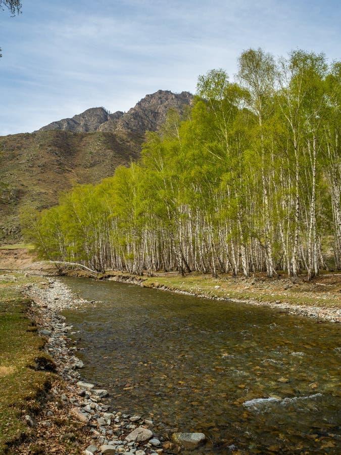 小,但是风雨如磐的山河小Yaloman和森林在阿尔泰,俄罗斯 免版税库存照片