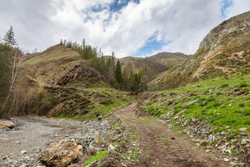 小,但是风雨如磐的山河小Yaloman和路在阿尔泰,俄罗斯 免版税库存图片