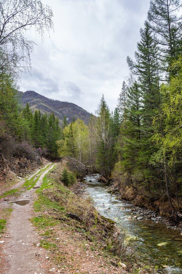 小,但是风雨如磐的山河小Yaloman和路通过森林在阿尔泰,俄罗斯 库存图片