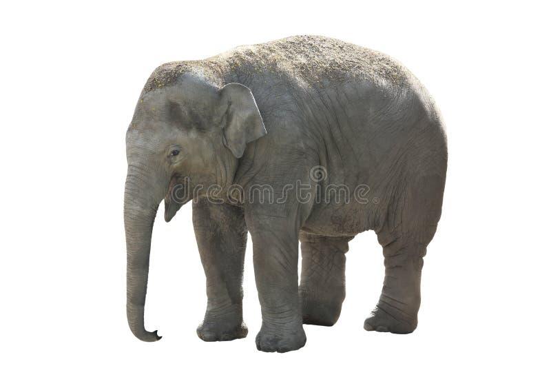 小,大象 库存照片