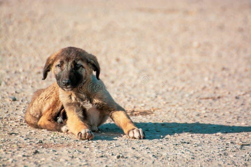 小,逗人喜爱的棕色小狗是单独的在街道上 概念的aban 库存图片