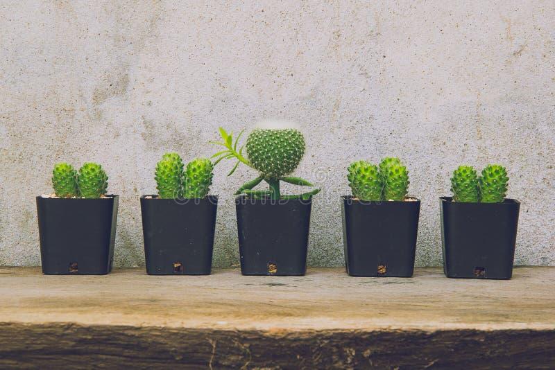 小组仙人掌植物 免版税库存图片