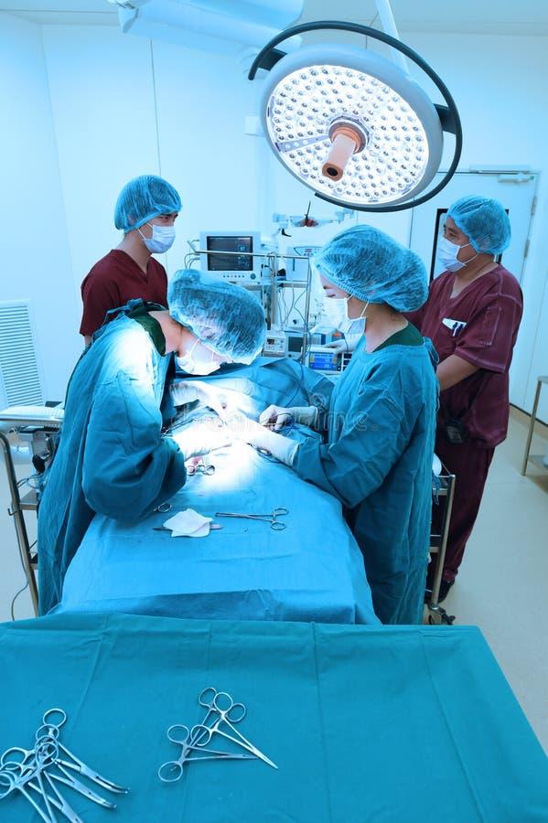 小组兽医手术运转中室 免版税库存照片