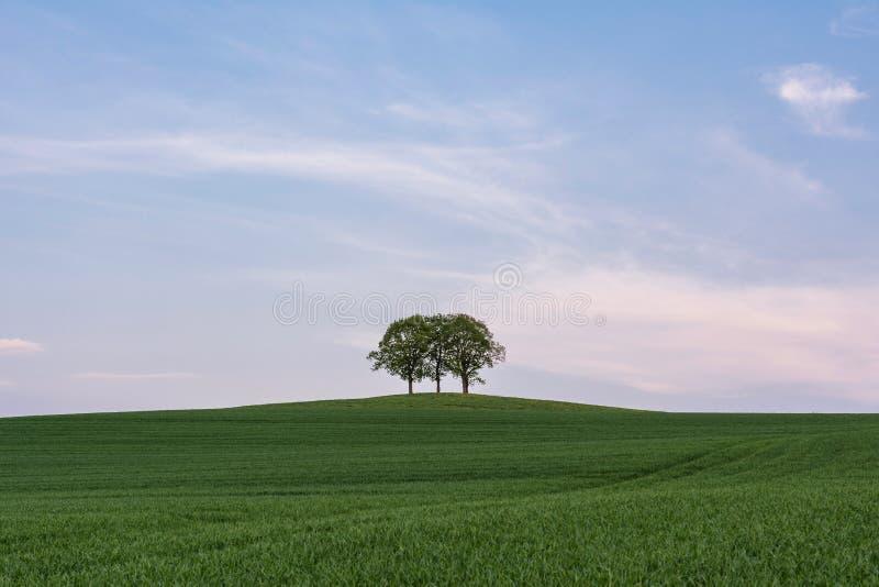 小组在小山的树 免版税库存照片