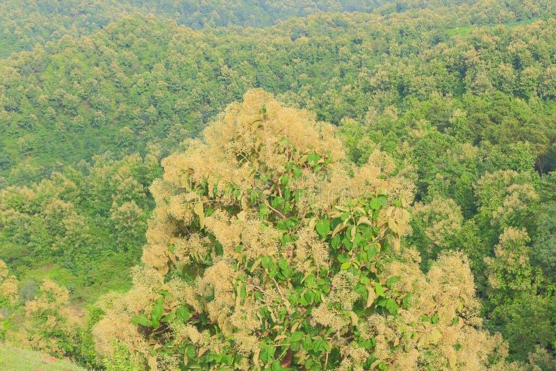 小组在小山的绿色狂放的树 库存照片
