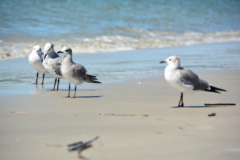 小组在海滩的海鸥 免版税库存图片