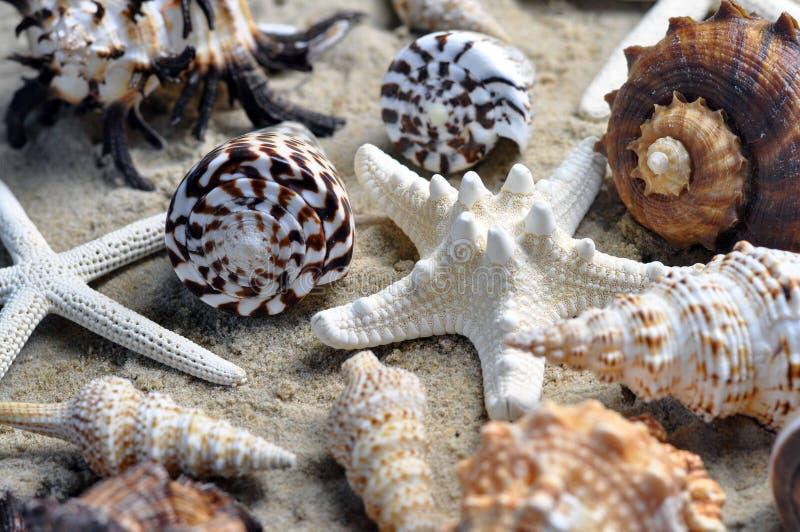 小组在海滩的美好的海壳 免版税库存照片