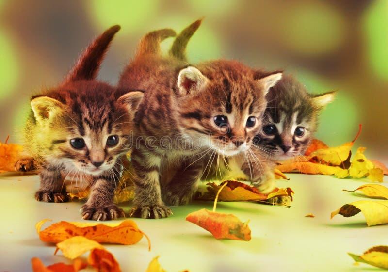 小组在秋叶的小小猫 免版税图库摄影