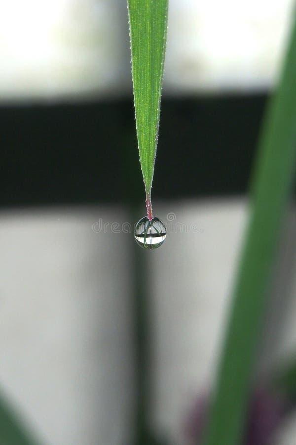 水小滴在草叶子的技巧的  免版税库存照片