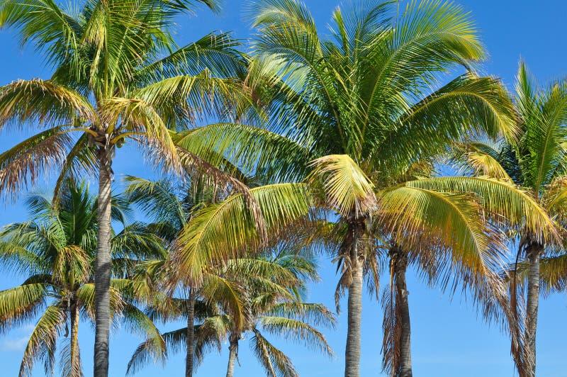 小组在蓝天的棕榈树在夏威夷 免版税库存图片