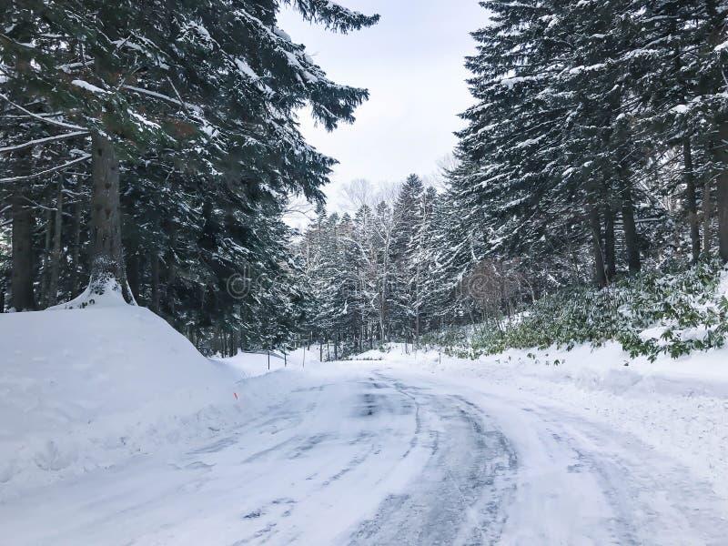 小组在雪的冷淡的云杉的树 免版税图库摄影