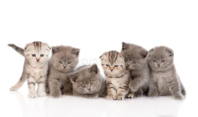 小组小小猫 背景查出的白色 免版税库存图片