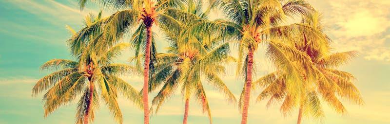 小组棕榈树,葡萄酒样式夏天全景,旅行概念 免版税库存照片
