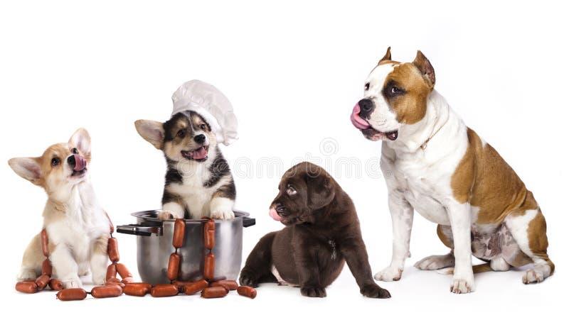 小组狗和食物 免版税库存图片