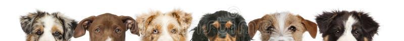 Download 小组狗头播种的看法 库存图片. 图片 包括有 敌意, 编排者, 许多, 题头, 国内, 钞票, 脊椎动物 - 30335959