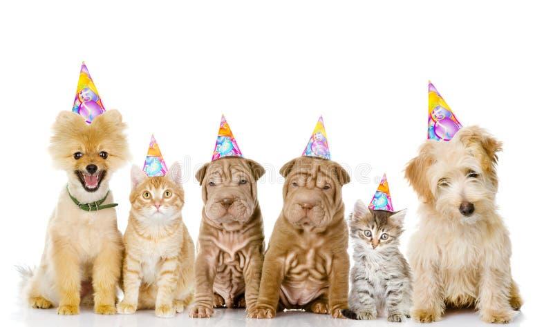 小组猫和狗与生日帽子 查出在白色 免版税库存照片