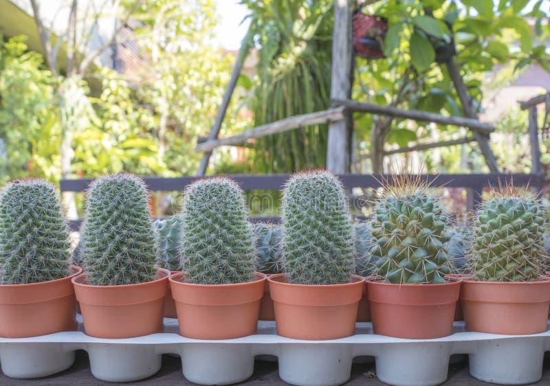 小组罐的仙人掌植物在庭院 库存图片