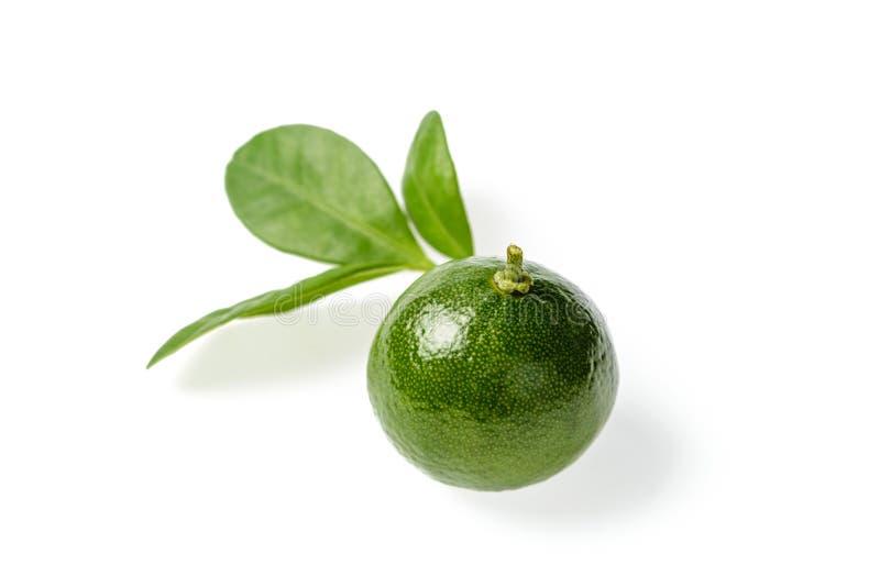 小绿色石灰 库存图片