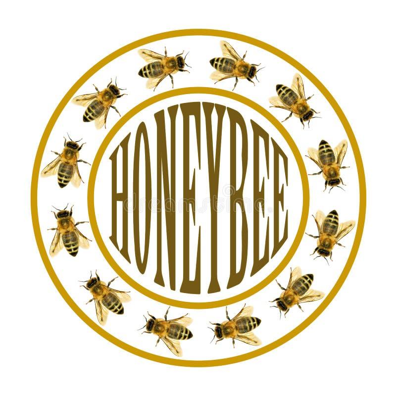 小组蜂或蜜蜂在圈子与文本 免版税图库摄影