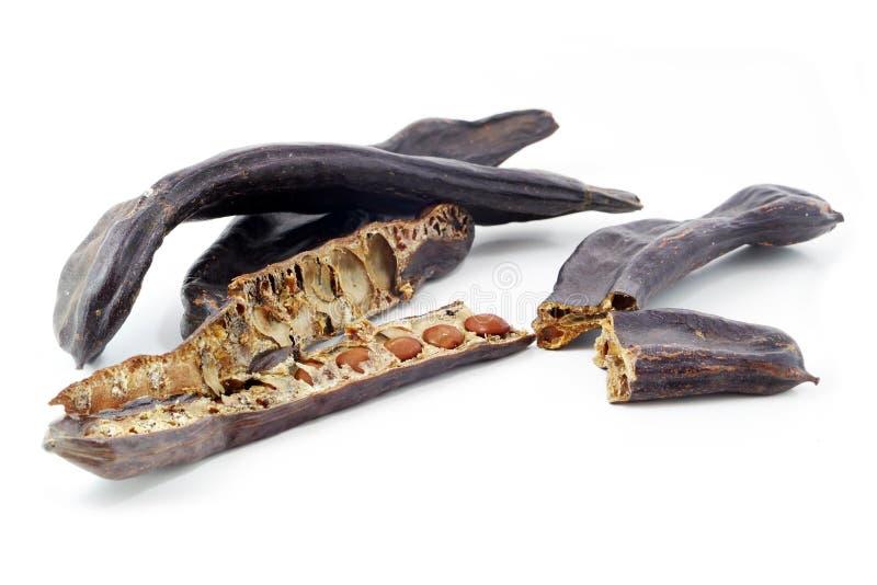 小组角豆树荚或圣约翰的面包与种子,被隔绝  免版税库存照片
