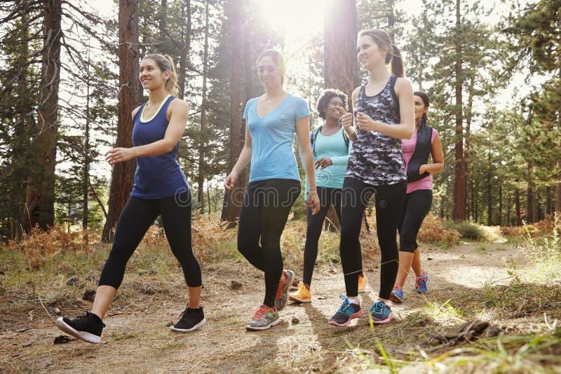 小组走在森林里的妇女赛跑者,关闭  免版税库存照片