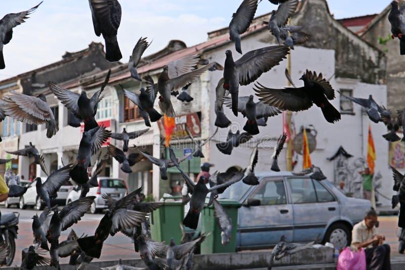 小组鸽子在城市 库存照片