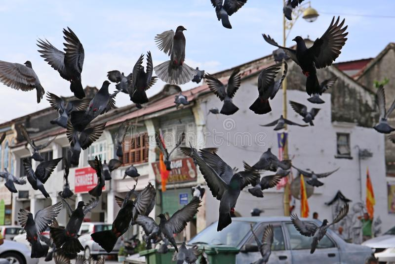 小组鸽子在城市 图库摄影