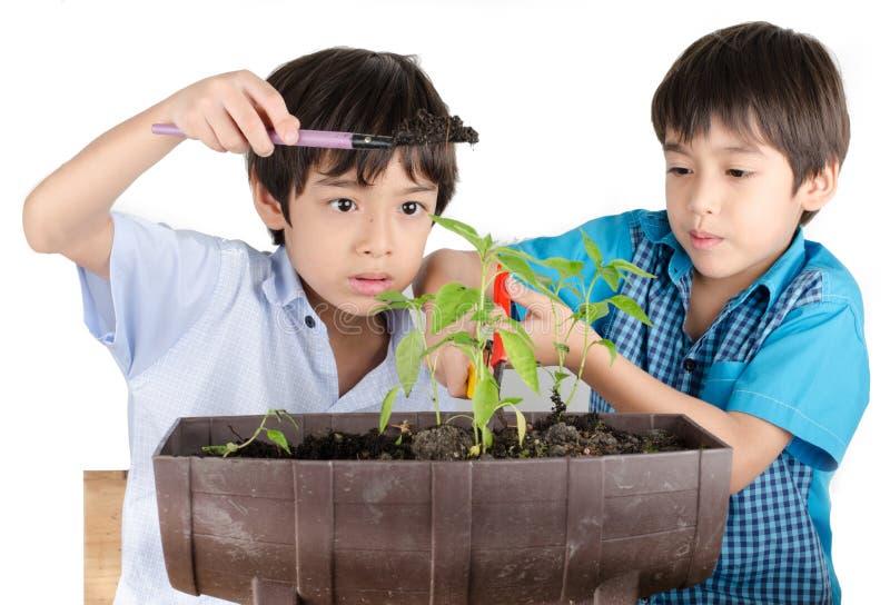 小sibbling的男孩与从事园艺一起使用 免版税库存图片