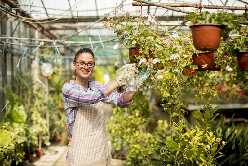 少妇与春天一起使用自温室开花 免版税图库摄影