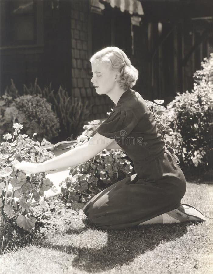少妇修剪植物全长侧视图在庭院里 免版税库存图片