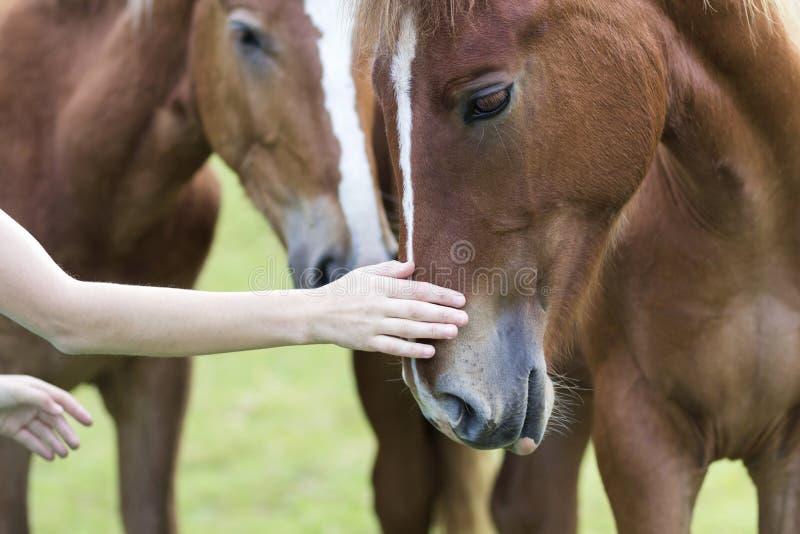 少妇手特写镜头爱抚在被弄脏的绿色晴朗的夏天背景的美好的栗子马头 对动物,汽车的爱 免版税图库摄影